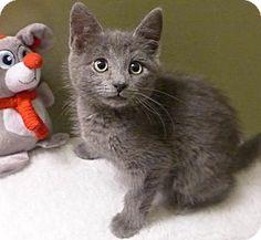 Foster Kittens needing forever homes!