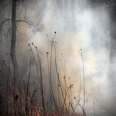 The Burn – a Photography Series by Jane Fulton Alt