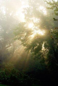 Ethereal Sunbeams Through Tree Photography, Sun Rays Photograph, Fine Art Photo Print, Nature Photography Fine Art Photo, Photo Art, Medan, Fae Aesthetic, Aesthetic Fashion, Tree Photography, Ethereal Photography, Landscape Photography, Portrait Photography