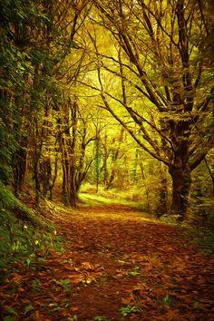 Sous bois près du château de la Roche par la Boutique photo déco Photo Deco, Woodland Garden, Life Is A Journey, We Are The World, Beautiful Landscapes, Paths, Nature, Paradise, Country Roads