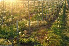 Monferrato, una merenda sinoira