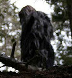 This is a particularly excellent Sasquatch report as well as a couple of decent photographs. Real Bigfoot Pictures, Bigfoot Photos, Finding Bigfoot, Bigfoot Sasquatch, Paparazzi Photos, Mothman, Cryptozoology, Angel Of Death, Fantasy Creatures