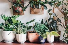 How To Propagate Plants for Beautiful DIY Holiday Gifts