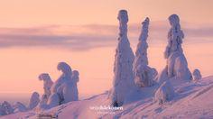 Snow Pillars