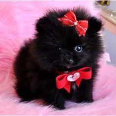 Soooo fluffy!!!