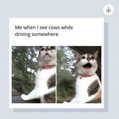 Vegan Meme, Going Vegan, Thought Provoking, Animal Rescue, You Got This, Cow, Adoption, Humor, Veganism