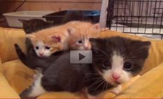 Fostering Brings so Much Joy. Watch These Little Babies Grow! - Love Meow