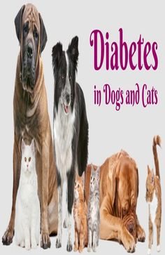 Diabetes in Dogs and Cats - Good Pet Parent Group Of Cats, Cat Health Care, Sick Cat, Cat Signs, Diabetic Dog, Happy Animals, Pet Care