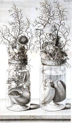 Specimen Jar Illustration circa 1710 of Frederik Ruysch from Thesaurus animalium Art And Illustration, Illustration Botanique, Arte Popular, Vanitas, Science And Nature, Macabre, Natural History, Printmaking, Art Drawings