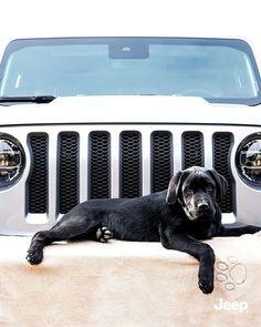 4 x 4 Lovers 📷 @lukagiulianik #Jeep #MyJeepWay #BackToTheRoots Boston Terrier, Jeep, Lovers, Cars, Animals, Instagram, Italia, Boston Terriers, Animales