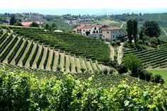 Italian Vineyards See Opportunity to Gain Ground in China's Wine Market