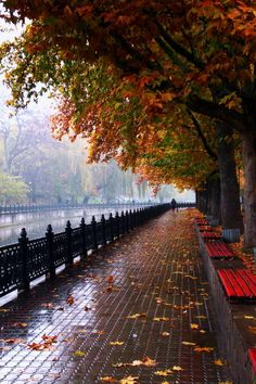 Wallpaper Paisagem Urbana 48 New Ideas Beautiful World, Beautiful Places, Autumn Scenes, Autumn Aesthetic, Autumn Photography, Rain Photography, Colour Photography, White Photography, Minimalist Photography