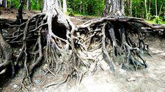 "Our Roots Go Deep"" j_w® original pictures."