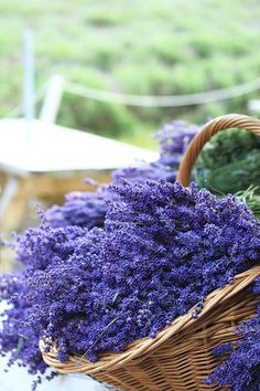 Basket of Lavender. (Photograph by Ayano0710.) French Lavender, Lavender Cottage, Lavender Blue, Lavender Fields, Lavender Flowers, Purple Flowers, Love Flowers, Beautiful Flowers, Spring Flowers