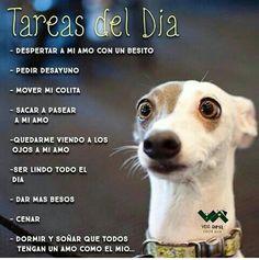 Tareas del día de un perro #animales