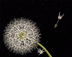 Calvin Nicholls, Canadian Paper Sculpture Artist Is A Master Of Paper Art Art Floral, Flower Images, Flower Art, Art Flowers, Flower Pictures, Watercolor Flowers, Art Pictures, Art Café, Bodies