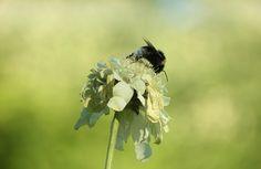 Blüte mit Hummel - Jahreszeiten - Galerie - Community