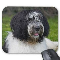 schapendoes dog photo | Schapendoes T-Shirts, Schapendoes Gifts, Cards, Posters, and other ...