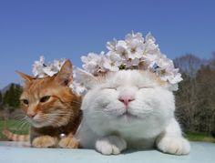 さくらの花