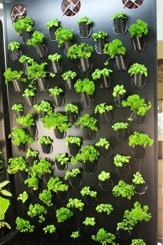 pre-made European interior plant wall for growing vegitables - use system idea for DIY with ABS pipe