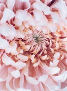 petals up close.