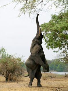 """'Liwonde National Park is a true gem, one that ranks highly on any """"to do"""" list for Malawi.' Malawi: the Bradt Guide www.bradtguides.com"""