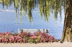 Montreux, ma ville ! août 2014