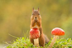 look for fall by geertweggen #animals #pets #fadighanemmd