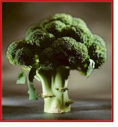 Broccoli -   Nutrition Information And Facts -   Add broccoli to your menu for its superb nutrition that protects from many forms of cancer