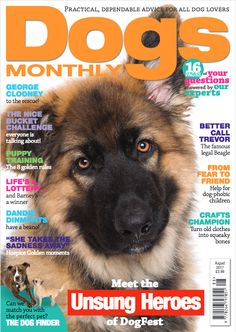 Dogs Monthly August 2017 - George Clooney talks dogs, puppy training, canine craft and more. Training Collar, Training Your Dog, All Dogs, Dogs And Puppies, Animal Magazines, Sick Dog, Guide Dog, Homemade Dog Treats, Fun Challenges