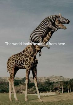 The world looks beautiful from here...