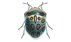 Insekten im Porträt: Krabbeln, Kribbeln, Colour-Blocking Portrait of insects: crawling, tingling, color blocking Cool Insects, Bugs And Insects, Beautiful Creatures, Animals Beautiful, Magical Creatures, Shield Bugs, Cool Bugs, Motifs Animal, A Bug's Life