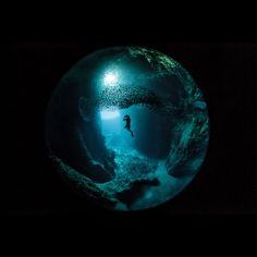 Definitive Proof That The Underwater World Is Eerily Photogenic At Night