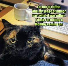 I'm out of coffee... #catoftheday #mondays