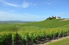 """When it comes to wine, Champagne holds a very special place. This is your gateway to the vineyards of the region and a chance to visit the most famous names in Champagne for a little tasting and education of the """"méthode champenoise"""", unique in the world! So classy!"""