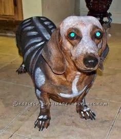 Halloween Dog Costume Ideas