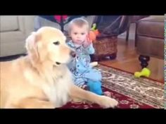 Best Top 10 Funny Baby Videos in 2014 HD||Golden Retriever Shares Toys with Baby!! - http://goo.gl/oEuQMB  #Babies