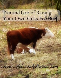 Excellent post!  A lot of questions I've had about raising bovine critters were answered in this post.