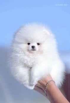 Fluffy cloud? Powder Puff? Snow Ball? Marshmallow? Total cuteness.