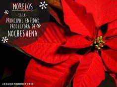Morelos es la principal entidad productora de nochebuena. SAGARPA SAGARPAMX #SomosProductores