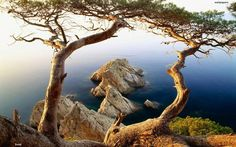 2 #trees and the #sea.