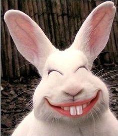Happy Easter Everyone!!! =)