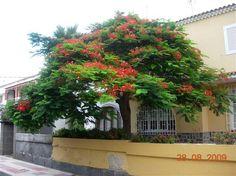"""Chalet adosado de 350 m²4  1 dormitorios3   1 wcChalet en Ciudad Jardín, en el mismo centro de Las Palmas de Gran Canaria, completamente amueblado con gusto, luminoso, en excelentes condiciones para familias.""""Precioso chalet en Ciudad Jardín. Bastante amplio y luminoso. Tiene 3 plantas y una buhardilla, aire acondicionado en todos los dormitorios y en la sala de estar"""
