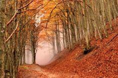 Parco delle foreste casentinesi faggeta in autunno