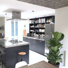 A shot of my newly painted black kitchen cupboards with leather handles and fiddle leaf fig plant