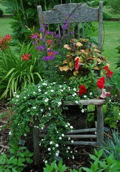 #Gardens   #Flowers   old chair