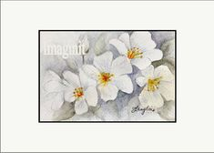 Original Miniature Painting in Watercolor  White Dogwood