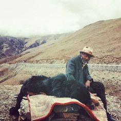 这不就是西藏版的《那人,那山,那狗》么!  #tibet #china #mountains #oldman #dog #tibetanmastiff #travel #travelgram #ontheroad #adventure #vscocam #vsco #wanderlust #anywhereanyhow