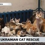 A Ukrainian woman paid a large sum of money to transport more than 40 cats to safety from the war torn conflict zone.