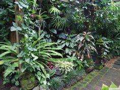 Pathway in subtropical garden